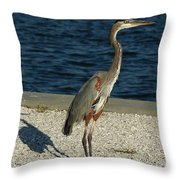 Tricolored Heron Portrait  Throw Pillow