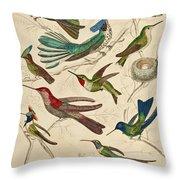 Trochilus - Hummingbirds Throw Pillow