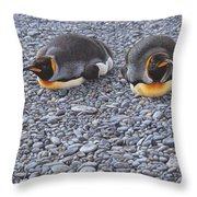Two King Penguins By Alan M Hunt Throw Pillow by Alan M Hunt