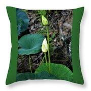 Two White Lotus Flower Buds Throw Pillow