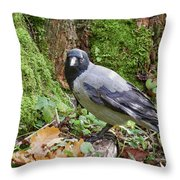 Under The Oak Tree. Hooded Crow Throw Pillow