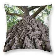 Up A Tree Throw Pillow