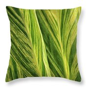 Variegated Shell Ginger Throw Pillow