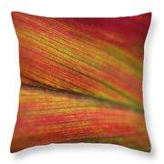 Variegated Ti Leaf Throw Pillow by Charmian Vistaunet