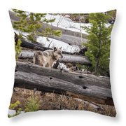 w75 Throw Pillow by Joshua Able's Wildlife