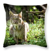 Watchful Mama Lynx Throw Pillow by Tim Newton