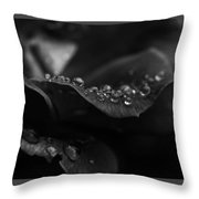 Water Droplets On A Rose Throw Pillow