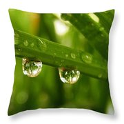 Water Drops On Wheat Leafs Throw Pillow
