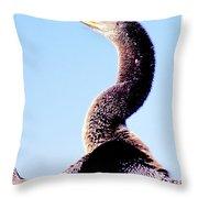 Water Turkey, Anhinga, Animal Portrait Throw Pillow