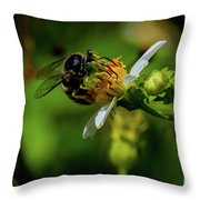 Western Sand Wasp Throw Pillow