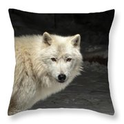 What's For Dinner? Throw Pillow by Susan Rissi Tregoning