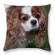 Where Is My Treat Throw Pillow