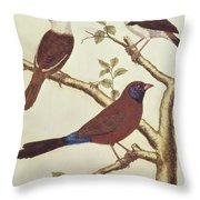 White Headed Munia, Double Coloured Seed Eater And Violet Eared Waxbill Throw Pillow