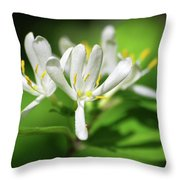 White Honeysuckle Flowers Throw Pillow