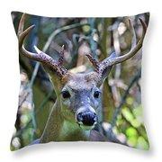 White Tailed Buck Portrait Throw Pillow
