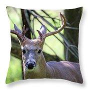 White Tailed Buck Portrait I Throw Pillow