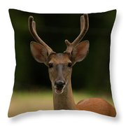 White-tailed Deer - 8282-2 Throw Pillow