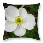 White Wood Anemone Throw Pillow