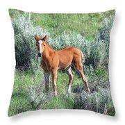 Wild Horse Foal Throw Pillow