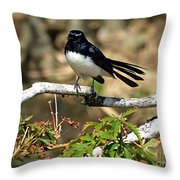Willy Wagtail #1 Throw Pillow
