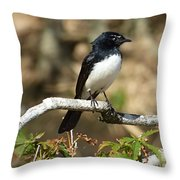 Willy Wagtail #2 Throw Pillow