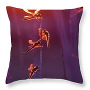 Winged Wonders - Dragonflies At Sunset Throw Pillow