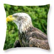Wisconsin Bald Eagle Throw Pillow