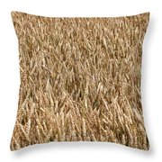 Wonderful Wheat Throw Pillow