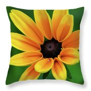 Yellow Flower Black Eyed Susan Throw Pillow