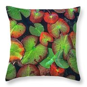 Yellow Pond Lily, Weminuche Wilderness Throw Pillow