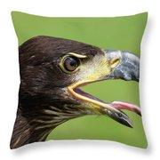 Young Bald Eagle 2 Throw Pillow