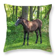Young Brown Colt Throw Pillow