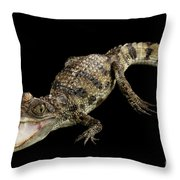 Young Cayman Crocodile, Reptile With Opened Mouth And Waved Tail Isolated On Black Background In Top Throw Pillow