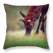 Young Elk Grazing Throw Pillow