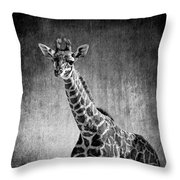 Young Giraffe Black And White Throw Pillow