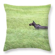 Young Moose Throw Pillow