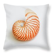 A Nautilus Seashell Photograph By Jacqueline Cooper
