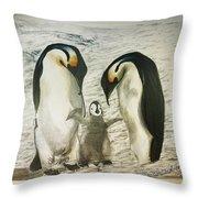 Emperor Penguin Drawing By Jason Churchill