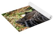 Black Swan At Nest Yoga Mat