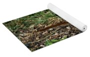 Brown Thrasher Yoga Mat