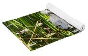 A Missing Frog Yoga Mat