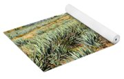 Agave Cactus Field In Mexico Yoga Mat