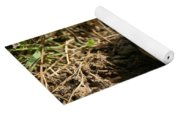 Baby Eastern Cottontail Yoga Mat