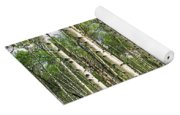 Birch Tree Grove In Summer Yoga Mat