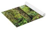 Boardwalk On The Rainforest Trail In Yoga Mat