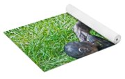 Bonobo Adult Playing With Baby Yoga Mat