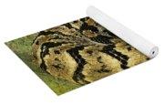 Canebrake Rattlesnake Yoga Mat