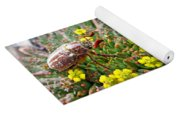 Chafer Beetle On Medusa Succulent In 3d Stereo Yoga Mat