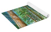 Coastal Redwoods Yoga Mat