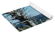 Gnarled Trees And Divide Mountain Yoga Mat